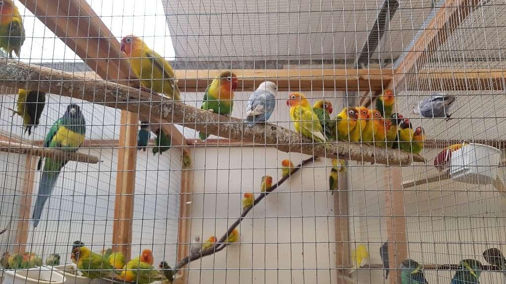 The Enfield Bird Centre bird cages - pet store  | Photo 4 of 10 | Address: Cattlegate Rd, Enfield EN2 9DS, UK | Phone: 020 8367 9223