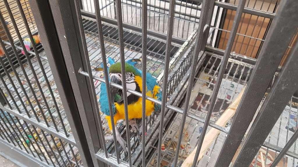 The Enfield Bird Centre bird cages - pet store  | Photo 7 of 10 | Address: Cattlegate Rd, Enfield EN2 9DS, UK | Phone: 020 8367 9223