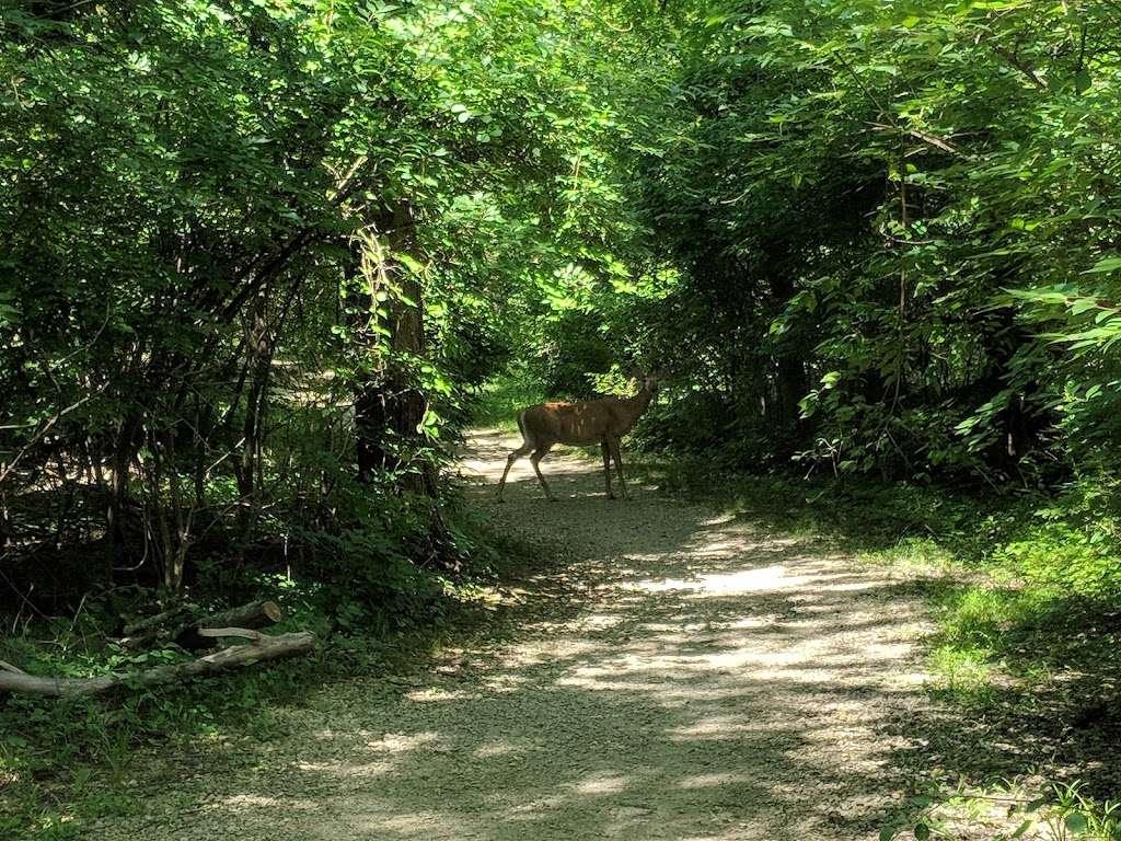 Flourtown Picnic Area, Fort Washington State Park - park    Photo 2 of 10   Address: 43-44 W Mill Rd, Flourtown, PA 19031, USA   Phone: (215) 591-5250