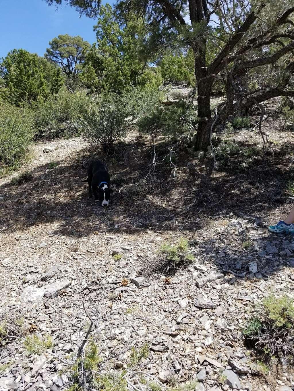 Camp Potosi Park - park    Photo 9 of 10   Address: 11480 Mount Potosi Canyon Rd, Las Vegas, NV 89124, USA   Phone: (702) 455-8200