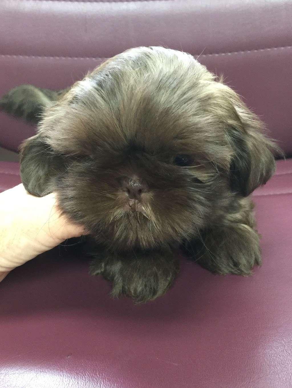 DEBORAHS YORKIES - pet store  | Photo 3 of 6 | Address: 248 Thornton Dr, Mcconnellsburg, PA 17233, USA | Phone: (717) 816-4307