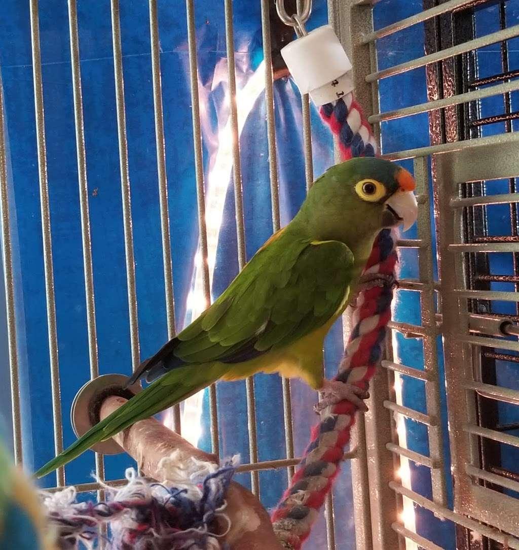 Stella's Exotic Birds - Pet store | 2050 Hampton Rd, Hoffman