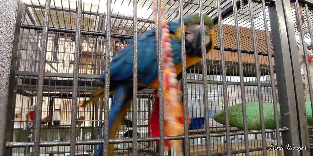The Enfield Bird Centre bird cages - pet store  | Photo 10 of 10 | Address: Cattlegate Rd, Enfield EN2 9DS, UK | Phone: 020 8367 9223