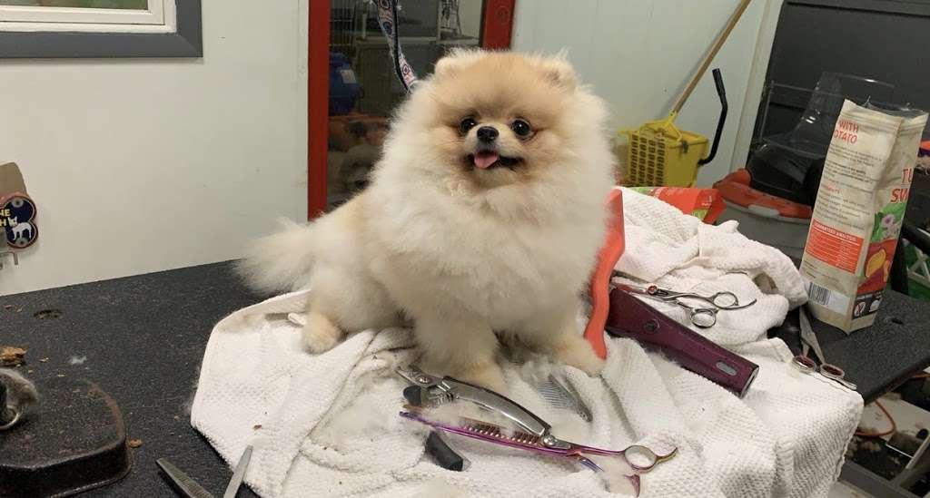 Pomeranian Puppies, Boutique - pet store  | Photo 6 of 10 | Address: Houston, TX, USA | Phone: (650) 303-1599