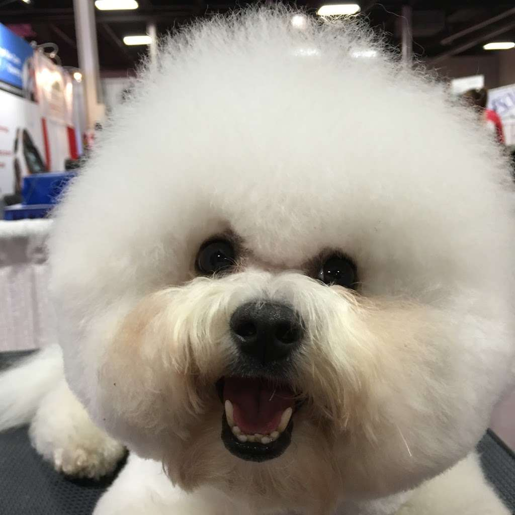 Pets Wonder Grooming - pet store  | Photo 5 of 10 | Address: 64-71 Dry Harbor Rd, Middle Village, NY 11379, USA | Phone: (718) 894-0163