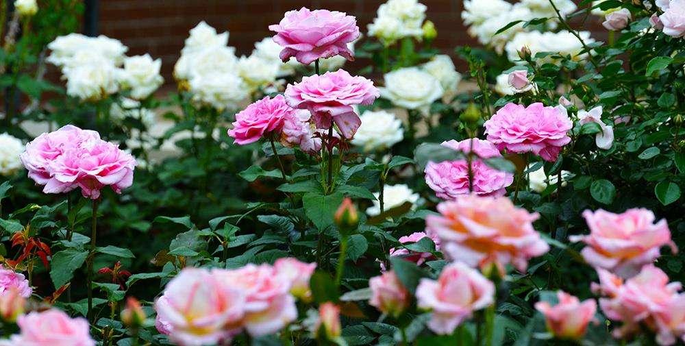 Lisena Garden Center & Nursery - store    Photo 2 of 7   Address: 12-5 Cross Bay Blvd, Broad Channel, NY 11693, USA   Phone: (718) 607-5413