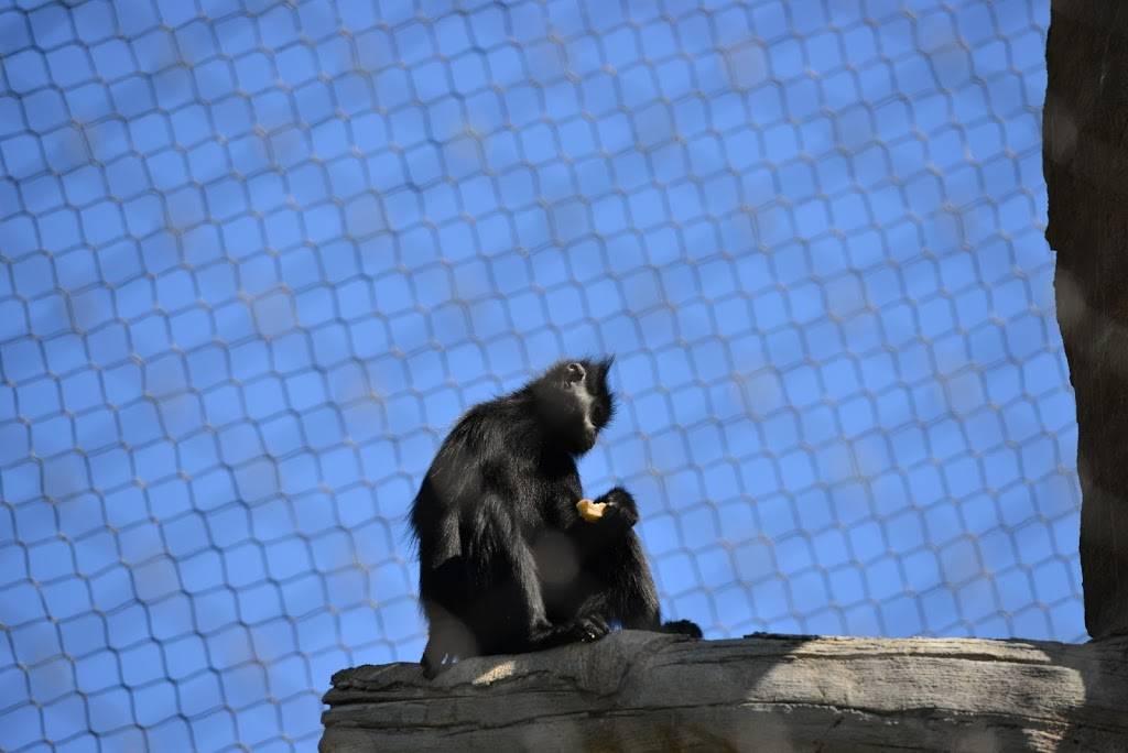 Hubbard Orangutan Forest - zoo    Photo 4 of 9   Address: 2119170000, Omaha, NE 68108, USA   Phone: (402) 733-8401
