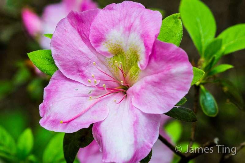 Lilac Collection - park  | Photo 5 of 10 | Address: Bronx Park Rd, Bronx, NY 10467, USA | Phone: (718) 817-8700