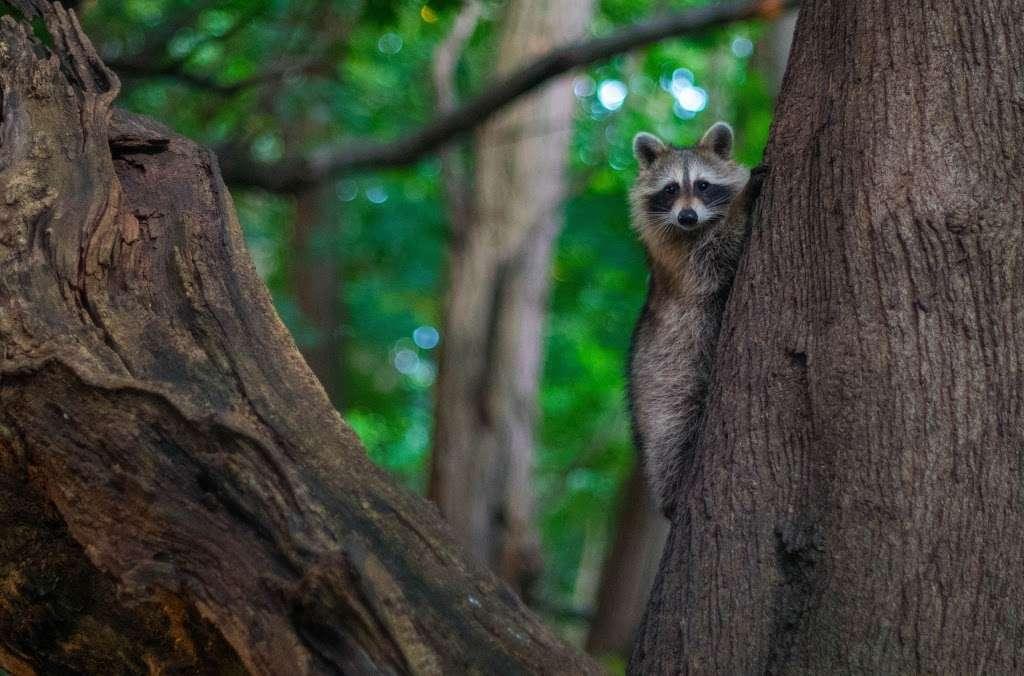 Raoul Wallenberg Forest - park  | Photo 4 of 6 | Address: Douglas Ave, Bronx, NY 10463, USA | Phone: (212) 639-9675