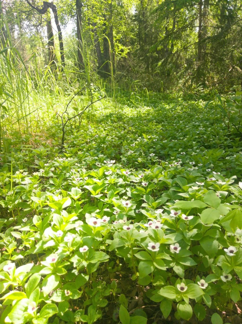 Arnold L. Muldoon Park - park  | Photo 1 of 8 | Address: 7600 E Northern Lights Blvd, Anchorage, AK 99504, USA | Phone: (907) 343-4355