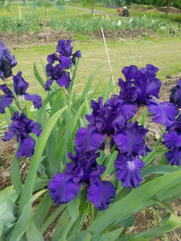 Lambertville Iris Patch - store    Photo 3 of 10   Address: 641 Brunswick Pike, Lambertville, NJ 08530, USA   Phone: (609) 397-3560