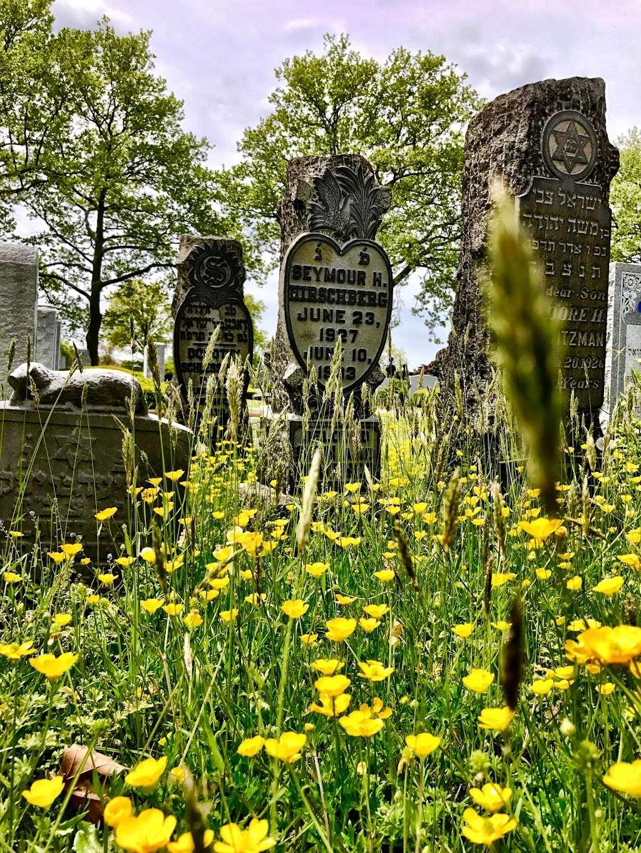 Beth David Cemetery - cemetery    Photo 3 of 10   Address: 300 Elmont Rd, Elmont, NY 11003, USA   Phone: (516) 328-1300