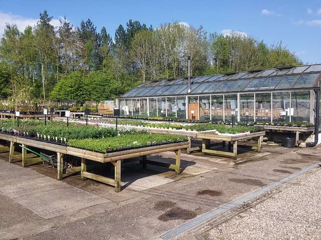 Buckland Nurseries Garden Centre - store  | Photo 5 of 10 | Address: Reigate Rd, Reigate, Betchworth RH2 9RE, UK | Phone: 01737 242990