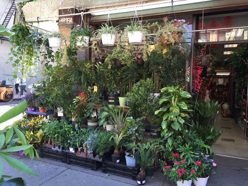 Da Hing Florist - florist  | Photo 1 of 10 | Address: 289 Grand St, New York, NY 10002, USA | Phone: (646) 649-5088