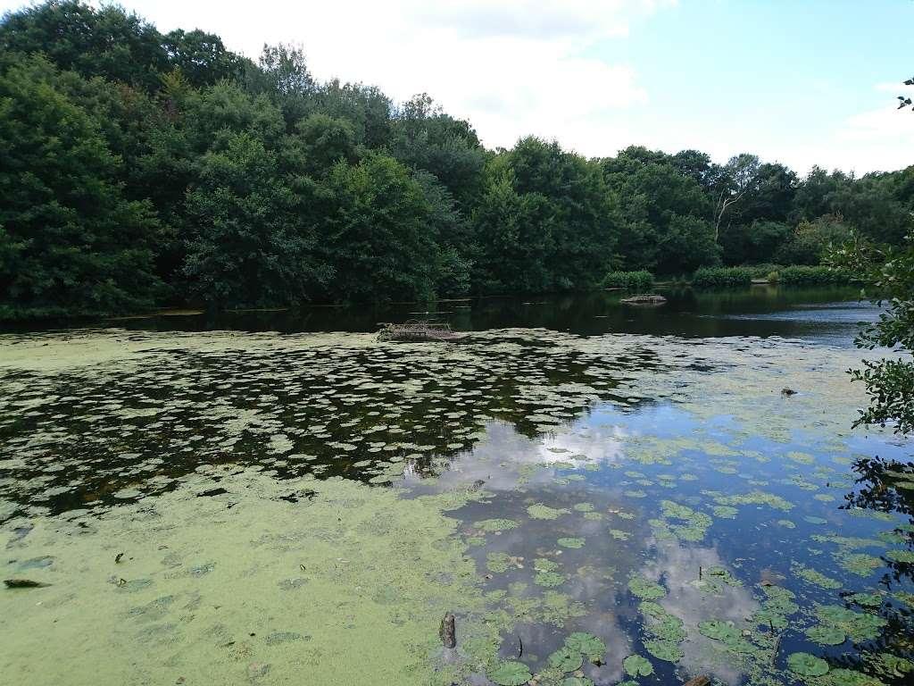 Queensmere Pond, Wimbledon Common - park  | Photo 8 of 10 | Address: Windmill Rd, Wimbledon, London SW19 5NR, UK | Phone: 020 8788 7655