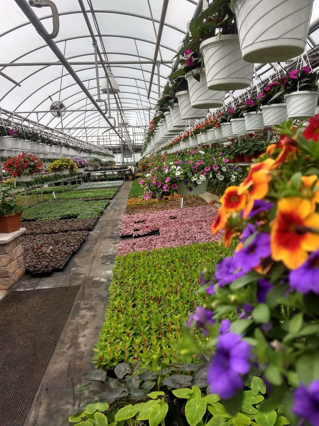 Schulmeister Greenhouses - store  | Photo 7 of 10 | Address: 103 Spring Hill Rd, Matawan, NJ 07747, USA | Phone: (732) 721-6829
