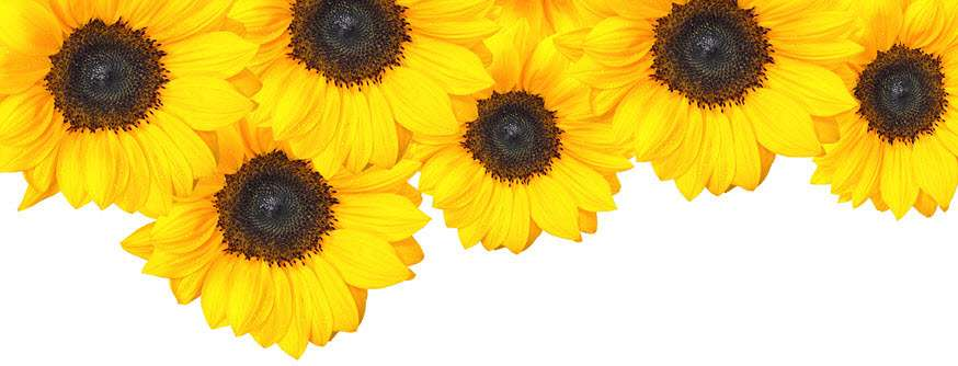 Sunflower Day Spa - hair care  | Photo 7 of 10 | Address: 684 Passaic Ave, Nutley, NJ 07110, USA | Phone: (973) 661-0303