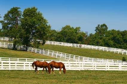 Temecula Valley Horse Property - real estate agency  | Photo 4 of 10 | Address: 40750 Carmelita Cir, Temecula, CA 92591, USA | Phone: (951) 966-1389