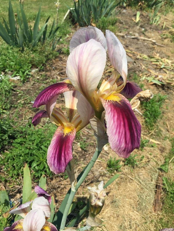 Lambertville Iris Patch - store    Photo 4 of 10   Address: 641 Brunswick Pike, Lambertville, NJ 08530, USA   Phone: (609) 397-3560