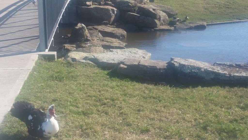 Heritage Park Overlook Basin - park  | Photo 7 of 10 | Address: Friendswood Link Rd, Friendswood, TX 77546, USA