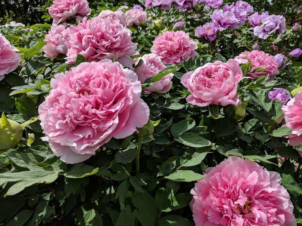 Rockefeller Rose Garden - park  | Photo 5 of 10 | Address: Bronx River Pkwy, Bronx, NY 10467, USA | Phone: (718) 817-8700