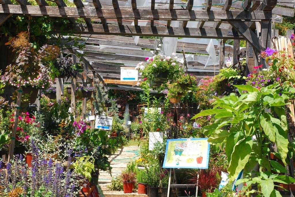 Plant Works - florist  | Photo 9 of 10 | Address: 7945 Hwy 9, Ben Lomond, CA 95005, USA | Phone: (831) 336-2212
