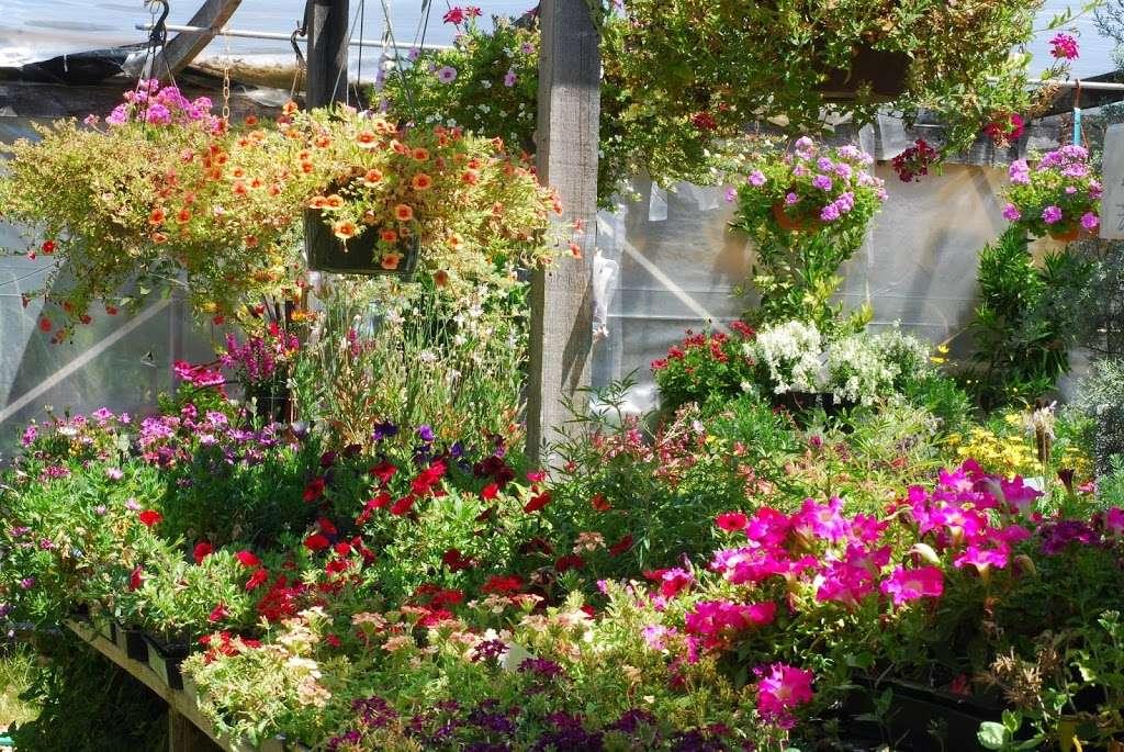 Plant Works - florist  | Photo 1 of 10 | Address: 7945 Hwy 9, Ben Lomond, CA 95005, USA | Phone: (831) 336-2212