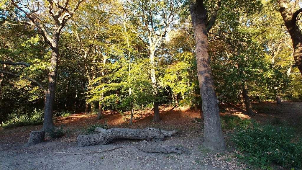 Queensmere Pond, Wimbledon Common - park  | Photo 5 of 10 | Address: Windmill Rd, Wimbledon, London SW19 5NR, UK | Phone: 020 8788 7655