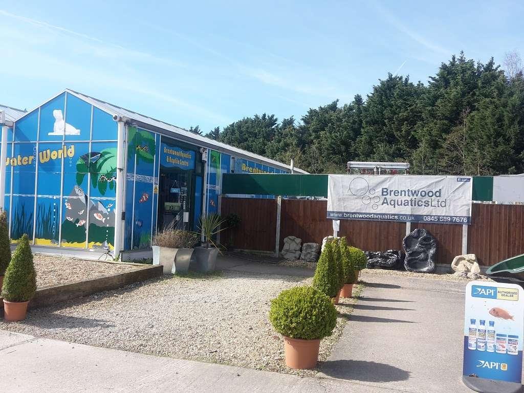 BRENTWOOD AQUATICS - pet store  | Photo 3 of 10 | Address: Ongar Rd, Kelvedon Hatch, Brentwood CM15 0JX, UK | Phone: 01277 295488