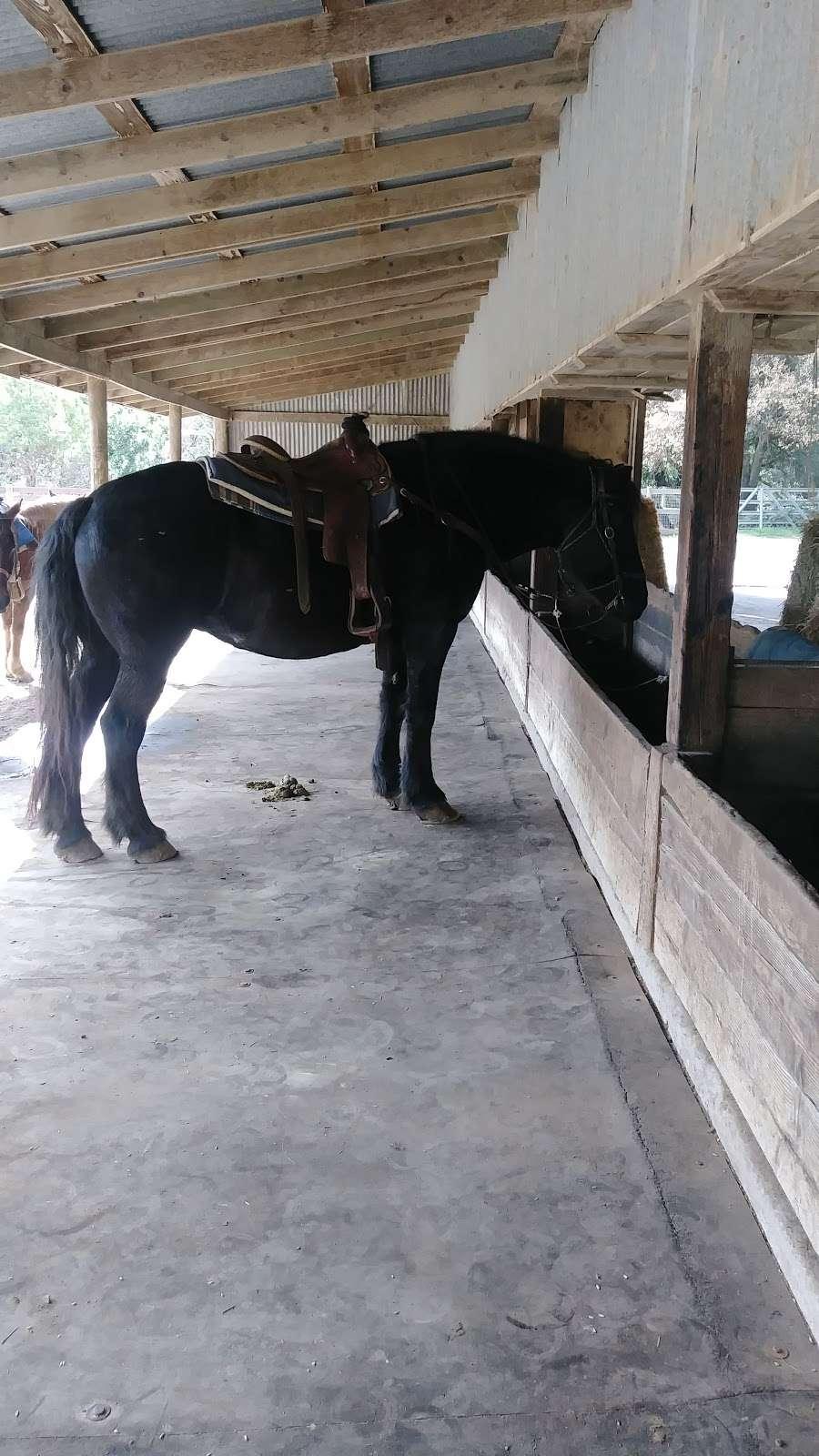Five Brooks Ranch - travel agency  | Photo 9 of 10 | Address: 8001 CA-1, Olema, CA 94950, USA | Phone: (415) 663-1570
