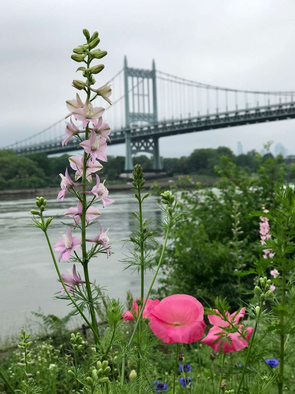 Native Plant Garden - park  | Photo 8 of 8 | Address: 11 Wards Meadow Loop, New York, NY 10035, USA
