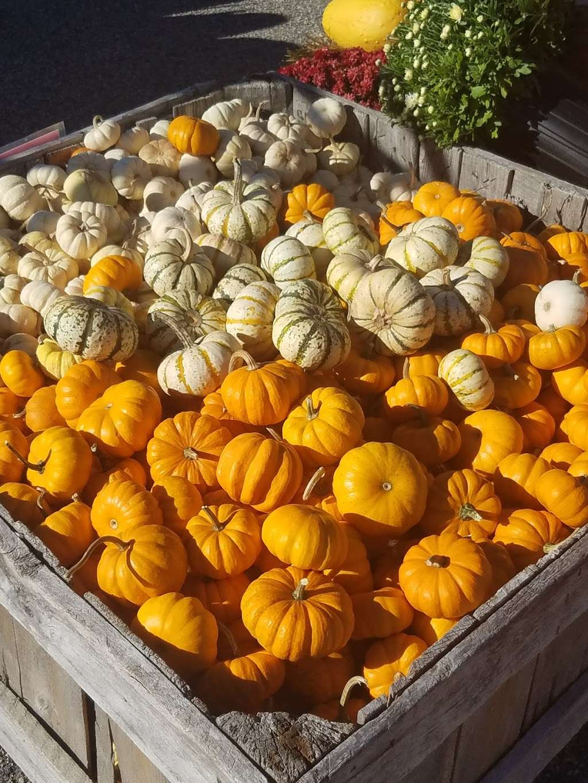 Ideal Farm Garden Center - store  | Photo 3 of 10 | Address: 222 NJ-15, Lafayette Township, NJ 07848, USA | Phone: (973) 579-3893