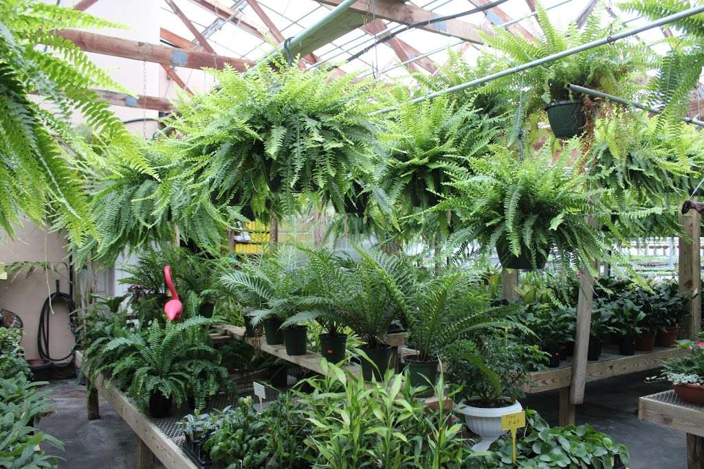 Shady Grove Greenhouse - store    Photo 8 of 10   Address: 122 Little Britain Rd, Nottingham, PA 19362, USA   Phone: (717) 529-3770