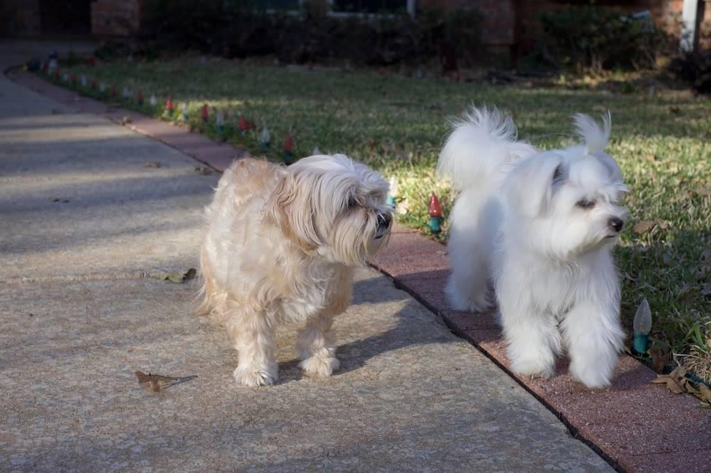 Parkside Animal Hospital - veterinary care  | Photo 5 of 8 | Address: 1780 Rufe Snow Dr, Keller, TX 76248, USA | Phone: (817) 281-1111