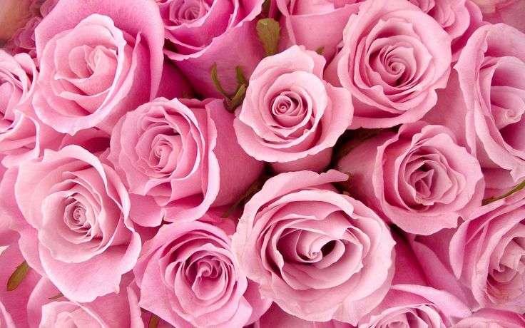 Crown Heights Florist & Fruit Baskets - florist    Photo 1 of 10   Address: 325 Kingston Ave, Brooklyn, NY 11213, USA   Phone: (718) 773-1000