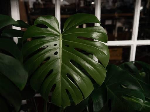 The Plant House - clothing store    Photo 2 of 8   Address: 22801 Woodward Ave, Ferndale, MI 48220, USA   Phone: (248) 270-8404