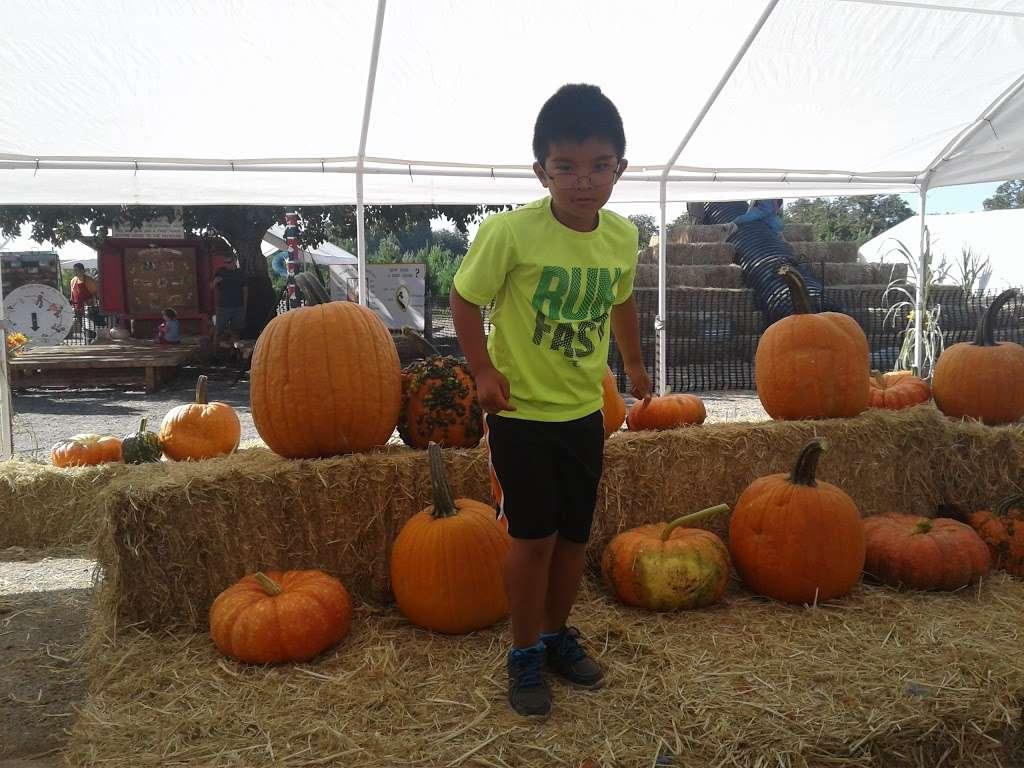 Silveyville Christmas Tree and Pumpkin Farm - store  | Photo 9 of 9 | Address: 6248 Silveyville Rd, Dixon, CA 95620, USA | Phone: (707) 678-1823
