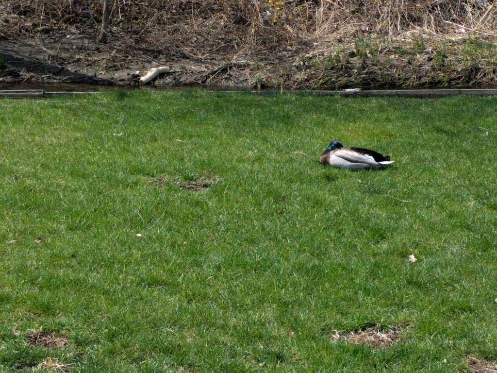 Harold Reskin Park - park  | Photo 3 of 5 | Address: Glendale Heights, IL 60139, USA