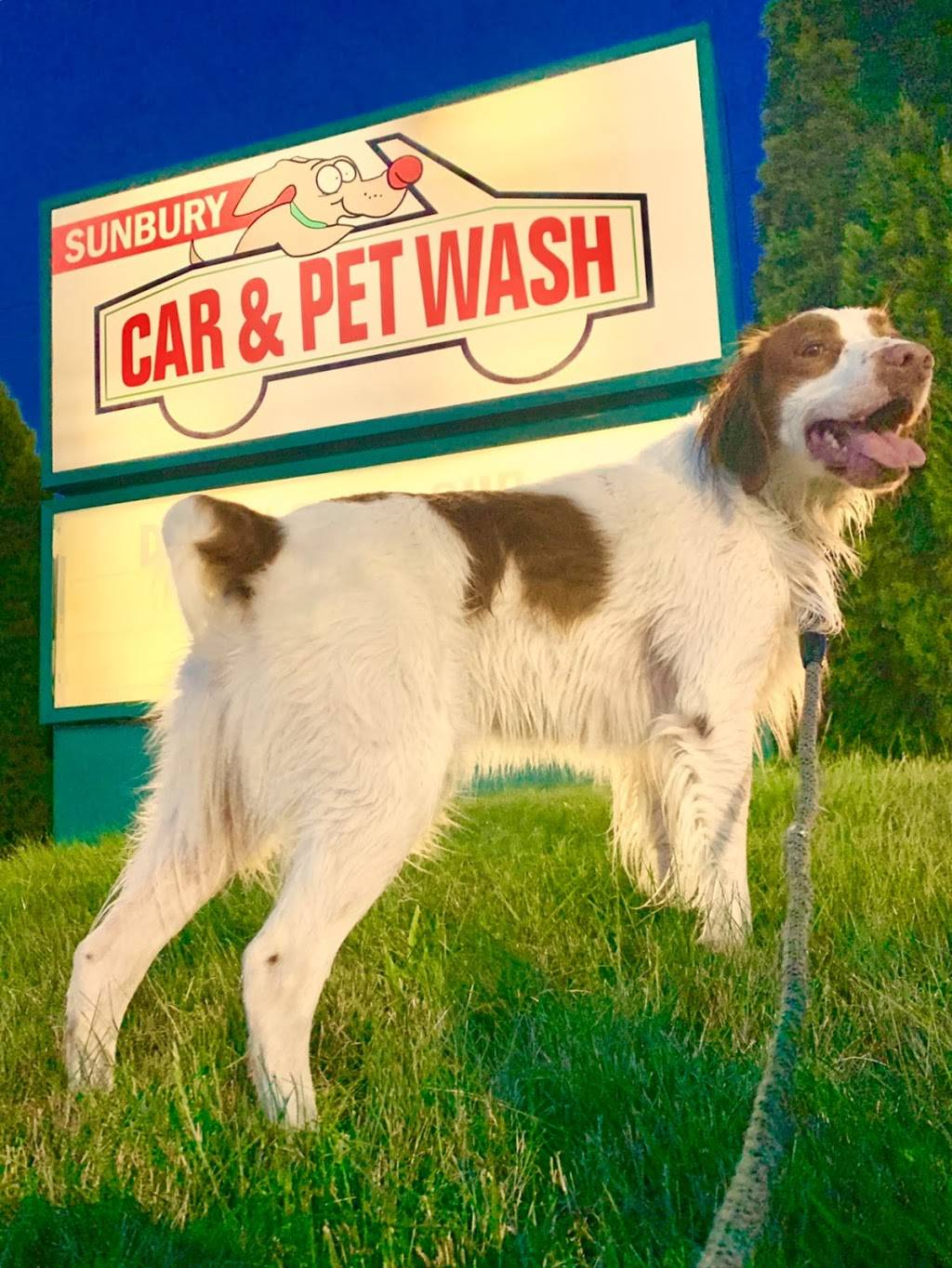 Sunbury Auto & Pet Wash - car wash  | Photo 7 of 7 | Address: 4353 Executive Pkwy, Westerville, OH 43081, USA | Phone: (614) 818-4669