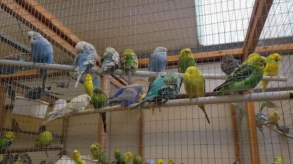 The Enfield Bird Centre bird cages - pet store  | Photo 6 of 10 | Address: Cattlegate Rd, Enfield EN2 9DS, UK | Phone: 020 8367 9223
