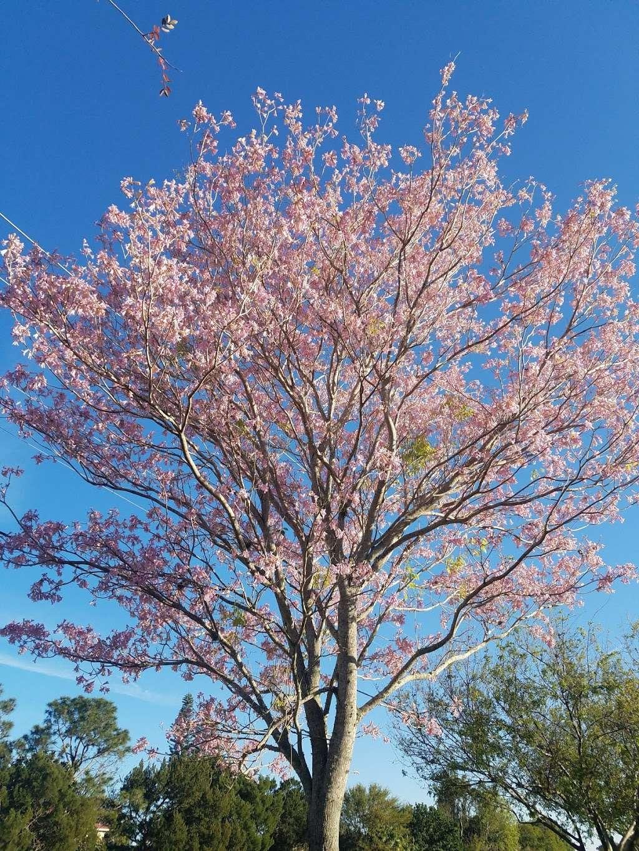 Suntree Interlachen Park - park  | Photo 5 of 10 | Address: 409 Interlachen Rd, Melbourne, FL 32940, USA | Phone: (321) 242-8960