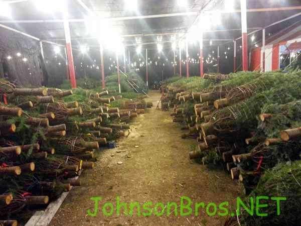 Johnson Brothers Pumpkin Patch and Christmas Tree Lot - store    Photo 8 of 10   Address: 15500 Jeffrey Rd, Irvine, CA 92618, USA   Phone: (714) 891-7456