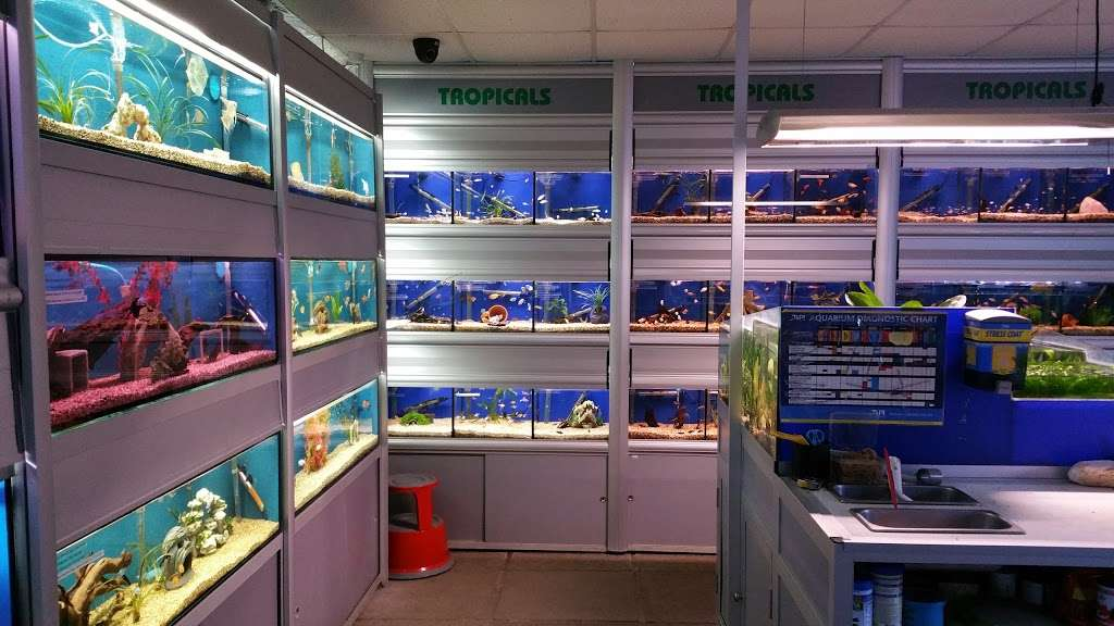 BRENTWOOD AQUATICS - pet store  | Photo 4 of 10 | Address: Ongar Rd, Kelvedon Hatch, Brentwood CM15 0JX, UK | Phone: 01277 295488