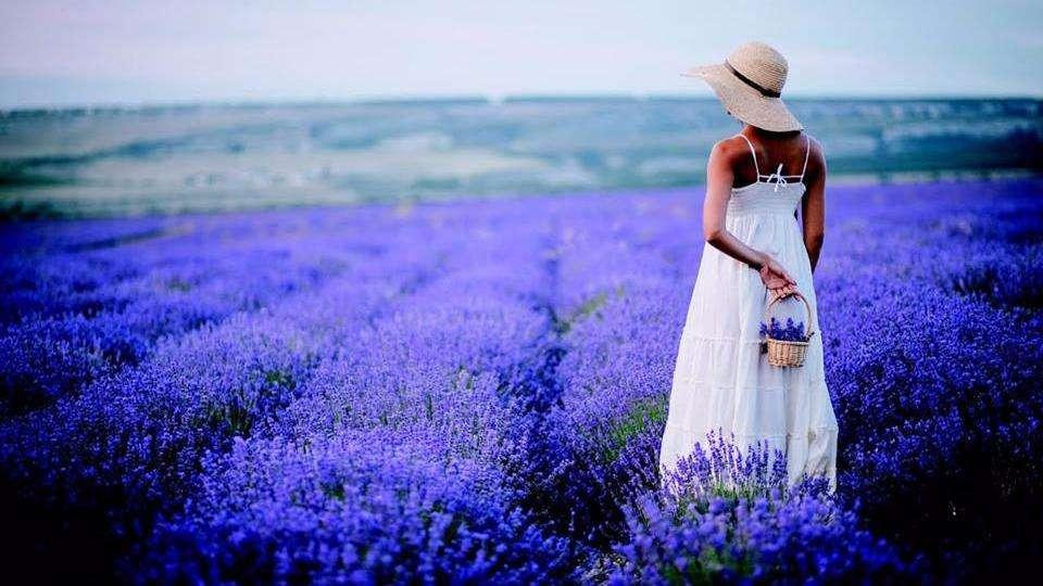Lavender Massage Spa - spa  | Photo 1 of 5 | Address: 1529 E Interstate 30 #101, Garland, TX 75043, USA | Phone: (469) 814-9282