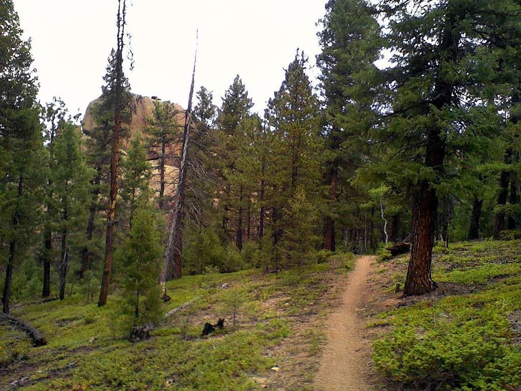 Meadows Group Campground - campground  | Photo 2 of 2 | Address: Buffalo Creek, CO 80425, USA | Phone: (303) 275-5610
