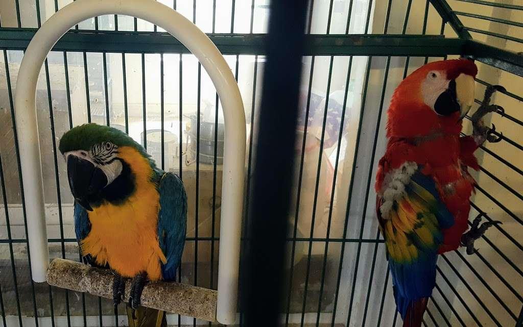 Stewarts Bird Farm - pet store  | Photo 4 of 10 | Address: 1560 Old Forty Foot Rd, Harleysville, PA 19438, USA | Phone: (215) 362-1123