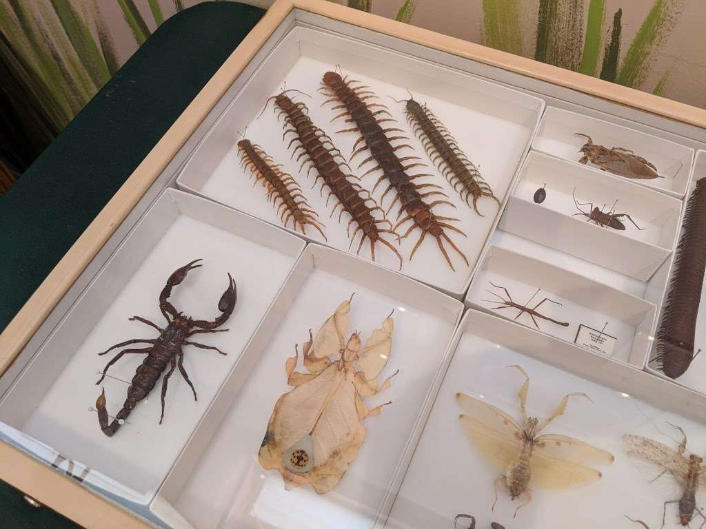 Insectropolis - museum  | Photo 4 of 10 | Address: 1761 U.S. 9, Toms River, NJ 08755, USA | Phone: (732) 349-7090