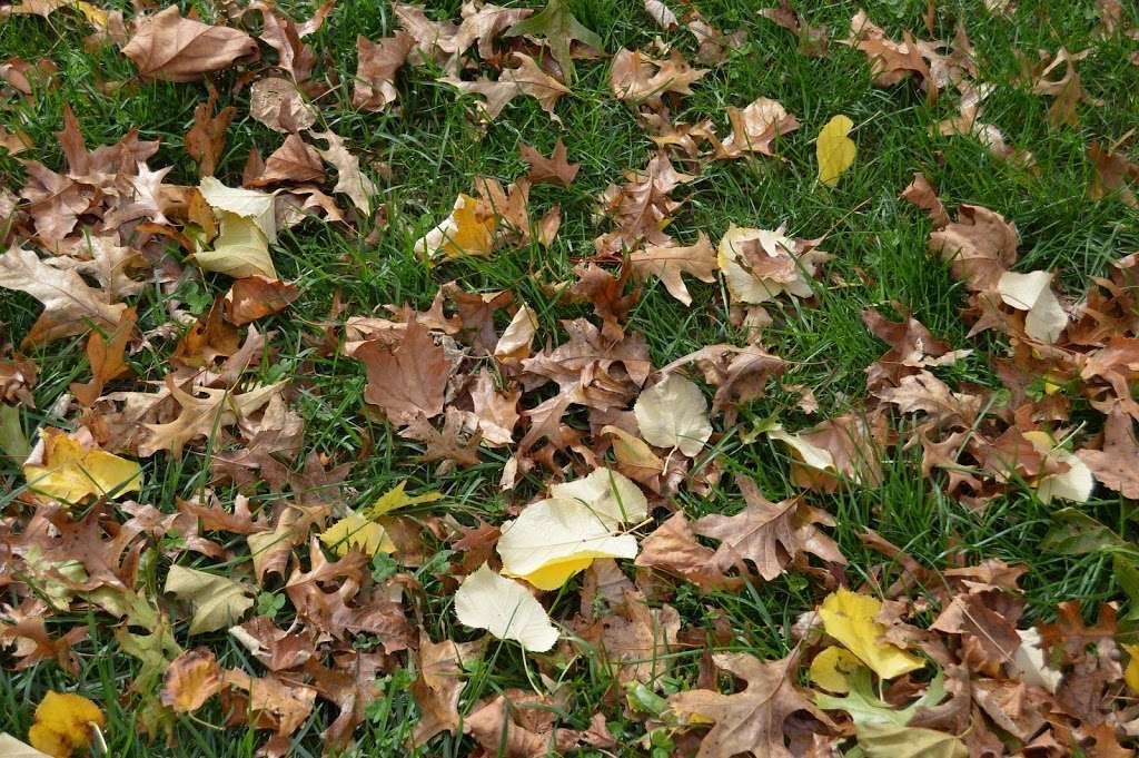 Bay Ridge Promenade (Start) - park  | Photo 7 of 10 | Address: Brooklyn, NY 11209, USA