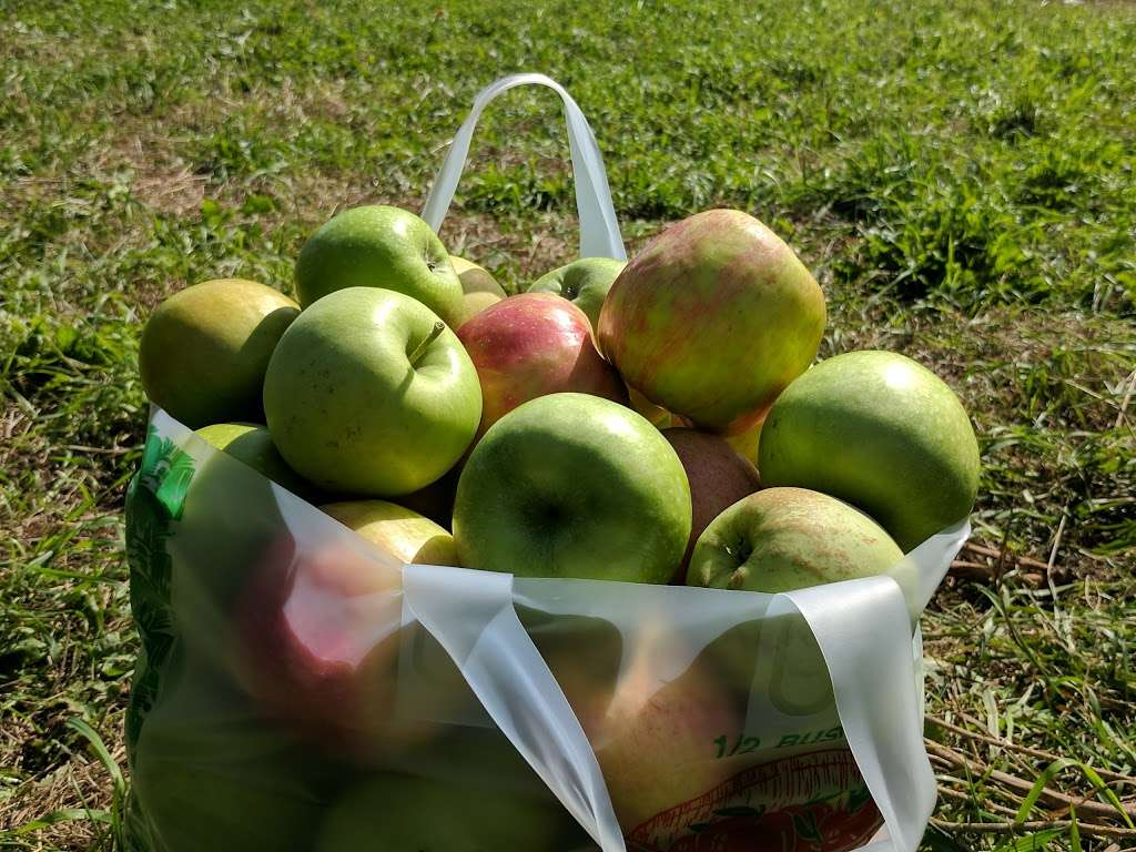 Barden Family Orchard - store  | Photo 5 of 10 | Address: 56 Elmdale Rd, North Scituate, RI 02857, USA | Phone: (401) 934-1413