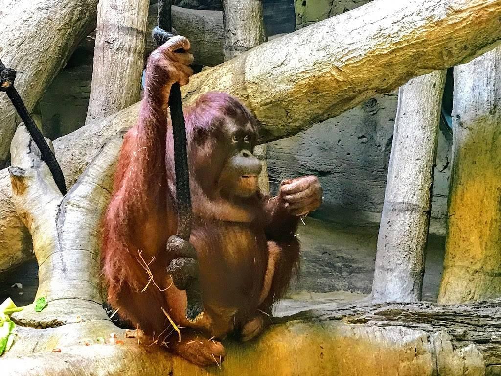 Hubbard Orangutan Forest - zoo    Photo 2 of 9   Address: 2119170000, Omaha, NE 68108, USA   Phone: (402) 733-8401